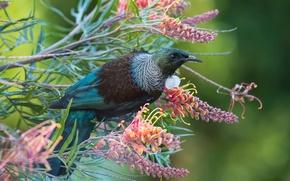 Картинка цветы, ветки, природа, птица, весна