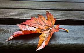 Картинка листья, макро, мокрый, фон, обои, листик, wallpaper, листочек, широкоформатные, background, полноэкранные, HD wallpapers, широкоэкранные