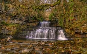 Картинка осень, лес, деревья, ветки, камни, Англия, мох, HDR, кусты, Cumbria, водопал, Cotterdale, Cotter Force
