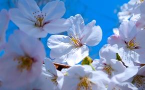 Картинка цветы, весна, лепестки, сад