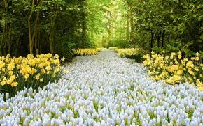 Картинка дорога, цветы, Road of Flowers