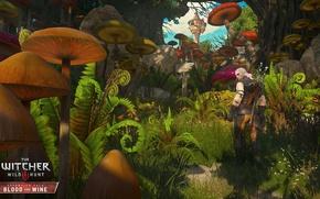 Картинка DLC, The Witcher 3, Wild Hunt, Кровь и Вино