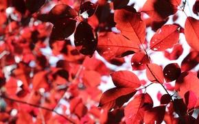 Картинка осень, листья, Лес, ботсад