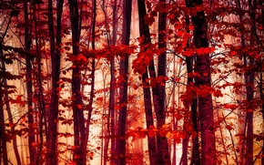 Картинка осень, лес, листья, багрянец