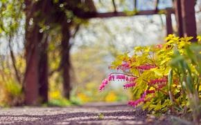 Картинка листья, цветы, куст, размытость