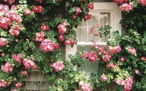 Обои цветочная стена, Окно, красотища