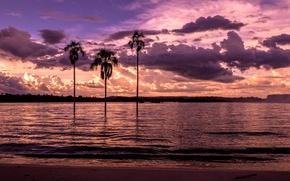 Картинка пляж, закат, пальмы, залив