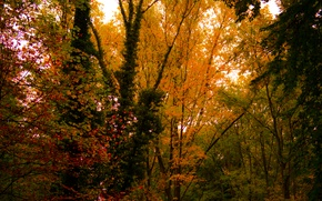 Картинка Nature, Autumn, Colours, Forest, Trees, Leaves, Lush
