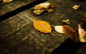 Обои осень, листья