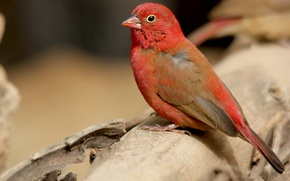 Картинка птица, цвет, перья, клюв