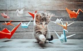 Картинка кот, усы, игра, лапы, размытость, мордочка, хвост, разные, оригами, cat, котяра, изучение, бумаги, журавль, боке, …