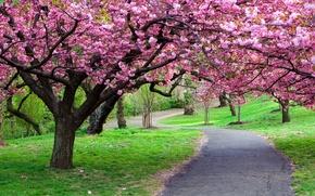 Обои парк, путь, природа, дорога, деревья, тропинка, фото, лес