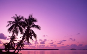 Обои восход, отпуск, Пальмы