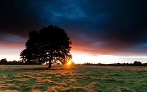 Обои поле, небо, трава, солнце, закат, дерево, сено