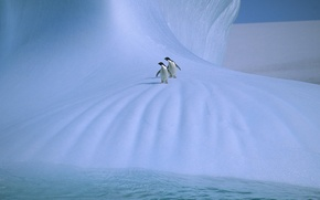 Картинка лед, пингвины