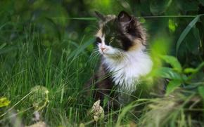 Обои пятнистый, трава, кот