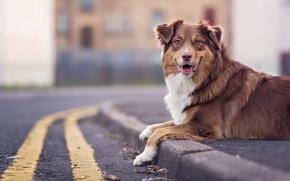 Картинка взгляд, друг, улица, собака