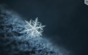 Картинка зима, макро, снежинка
