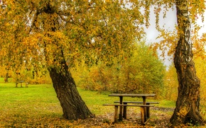 Картинка осень, листья, деревья, парк, желтые, скамейки, кусты, столик, лавочки