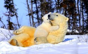 Картинка снег, деревья, нежность, медвежонок, ласка, мама, белые медведи