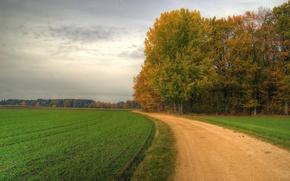 Обои поворот, 152, деревья, поле, дорога