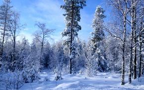 Картинка много, снег, лес, зима