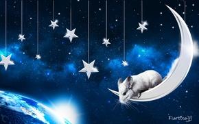 Картинка космос, луна, домашнее животное, небо., chinchilla, шиншилла