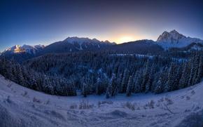 Обои горы, ущелье, лес, елки, зима, снег
