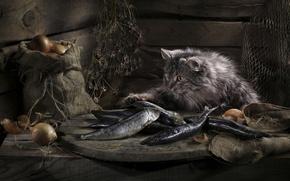 Картинка кошка, рыба, удача