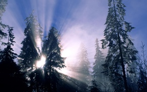 Картинка зима, лес, снег, деревья, солнечные лучи