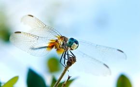 Картинка глаза, веточка, крылья, стрекоза