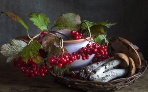 Обои осень, ягоды, грибы, подосиновик, калина