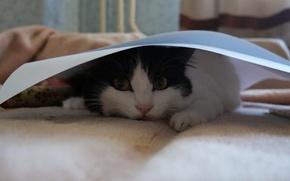 Картинка кошка, кошки, красота