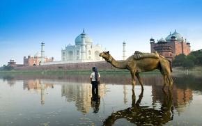 Обои Индия, Тадж-Махал, верблюд