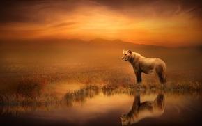 Картинка отражение, арт, львица