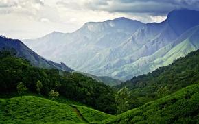 Картинка небо, горы, Индия, Муннар, чайные плантации