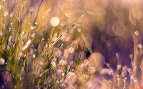 Картинка grass, weeds, pink, dewdrop