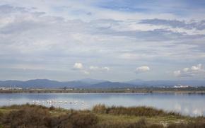 Картинка горы, птицы, озеро, фламинго