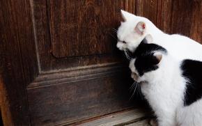 Обои кошаки, двери, коты