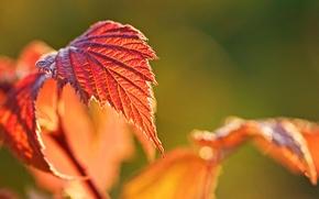 Картинка осень, макро, фон, widescreen, обои, размытие, листик, wallpaper, листочек, широкоформатные, background, autumn, macro, боке, полноэкранные, …