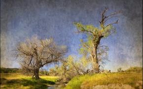 Картинка деревья, природа, стиль, ручей