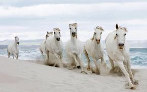 Обои табун, лошади, песок