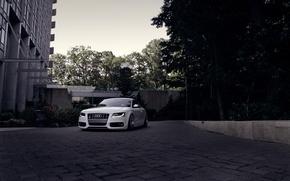 Картинка Audi, ауди, белая, перед, white