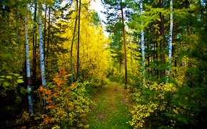 Картинка осень, лес, природа, тропа