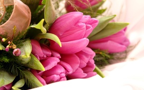 Обои цветы, тюльпаны