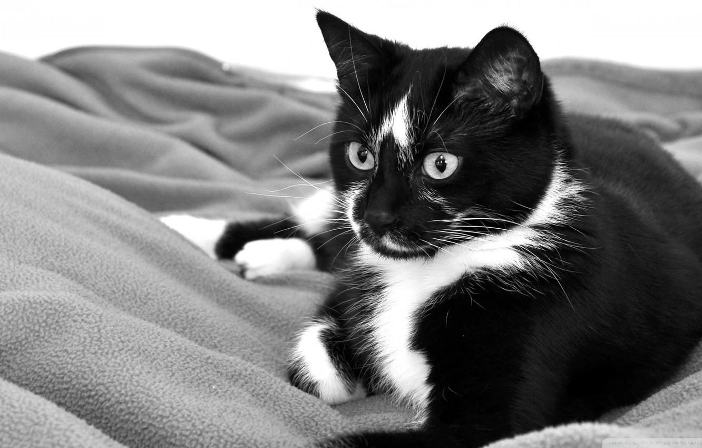 привод черно белые рисунки кошки фото стихах помощью красивой