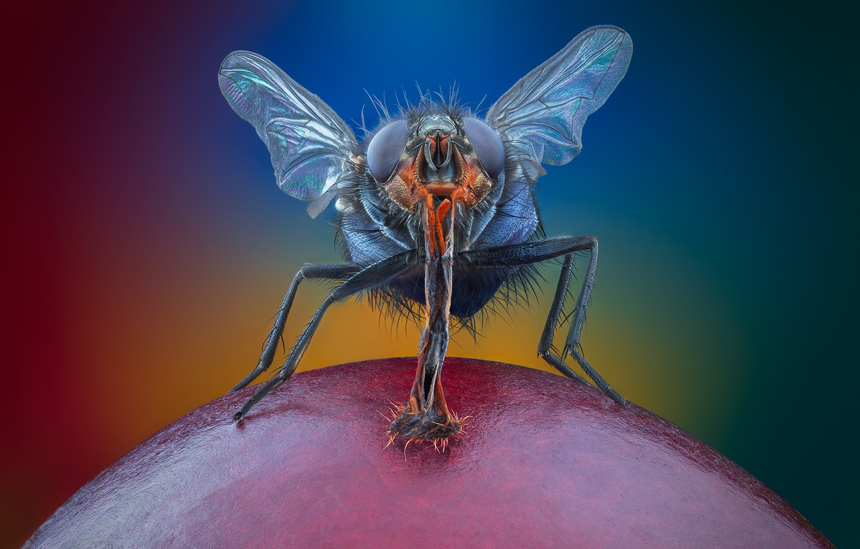Фото обои глаза, макро, муха, ноги, крылья, хоботок, vmenshov