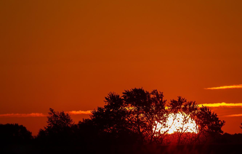 Фото обои небо, солнце, облака, деревья, закат, силуэт