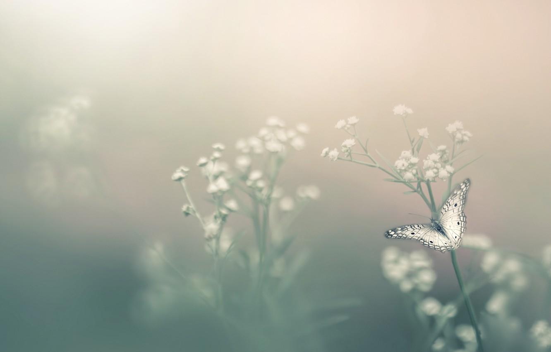 Фото обои цветок, туман, бабочка, боке, Насекомое