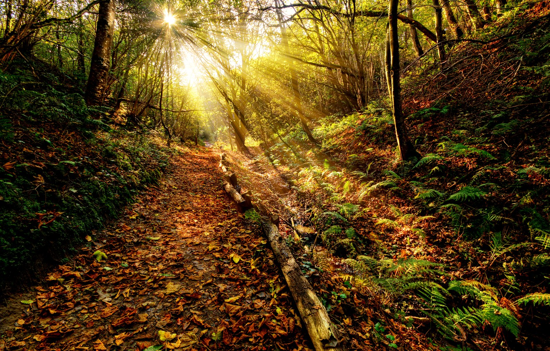 Фото обои осень, лес, небо, трава, листья, солнце, облака, лучи, пейзаж, закат, природа, пути, цвет, grass, forest, …